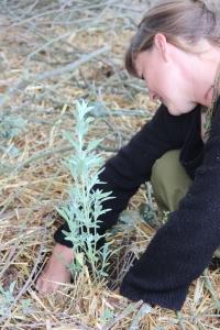 Elsa en profite pour planter ses premières aromates sous les conseils de Franck Nathié