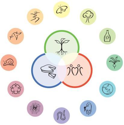 permaculture-principes2