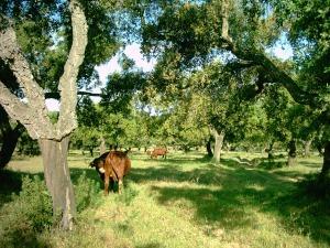 Approche Agro-Sylvo-Pastorale